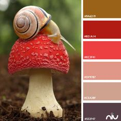 Snail (fauna)