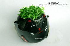 cat plant - Szukaj w Google