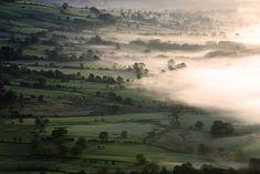 the fog, beauty