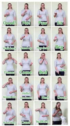 Hand signals (signing) to train deaf dogs.