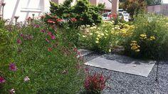 Perennial bed/Évelő ágyás Perennials, Sidewalk, Plants, Side Walkway, Walkway, Plant, Perennial, Walkways, Planets