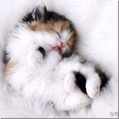 cute animals | Really Cute Animals » Blog Archive » Way too cute…