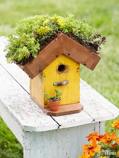 Living-Roof Birdhouse