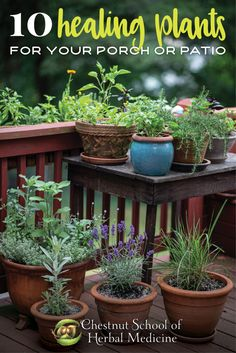 How to Grow Culinary Herbs in Containers: 10 Healing Plants for Your Porch and Patio #containergardening #pottedplantspatio #pottedherbs #herbalism #herbalmedicine #herbalist