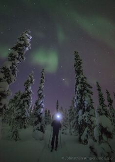 Cross country skiing under the aurora borealis through the snowy forest near Kiruna, Sweden.