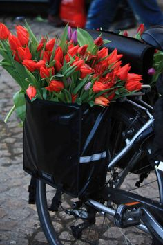 Bike Peddler sells Dutch Tulips - Amsterdam, Tulependag
