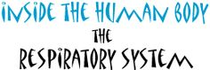 Discover the Respiratory System