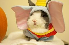 Dumbo...seriously?  Bunnies in costumes? I shall perish from the cute...