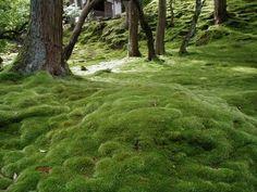 西芳寺(苔寺)の庭 | 桜貝のぶらり京都たび