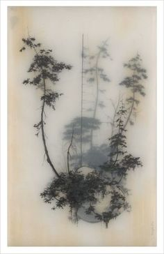 Drawing on layers of vellum - looks like trees in the mist