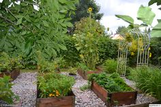 piha,puutarha,kasvimaa,lavakaulus Raised Beds, Garden Ideas, Yard, Outdoors, Indoor, Dreams, Vegetables, Plants, Summer