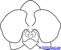 how to draw an orchid step 6