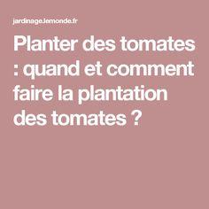 Planter des tomates : quand et comment faire la plantation des tomates ?