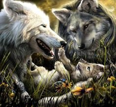 Wolf Familie