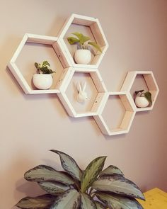 Made these honeycomb shelves for baby plants. : houseplants