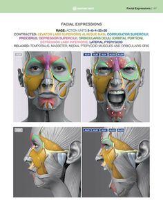 Face Muscles Anatomy, Facial Anatomy, Head Anatomy, Muscle Anatomy, Facial Muscles, Anatomy Drawing, Anatomy Art, Head Muscles, Muscles Of Facial Expression