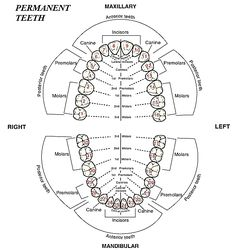 Entry Level Dental Assistant Resume Sample #dentist #