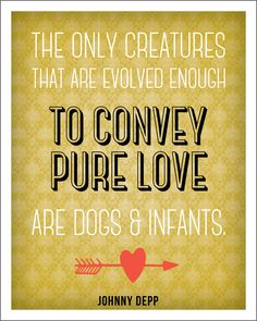 Dog Love #quote #quotes #quoteoftheday #inspiration #inspiring #inspirational #words #wisdom #wordsofwisdom #motivation #motivating #motivational #dog #dogs #love #doglove #purelove #loving #infants #depp #johnnydepp #johnnydeppquote  (http://trinadlambert.com)