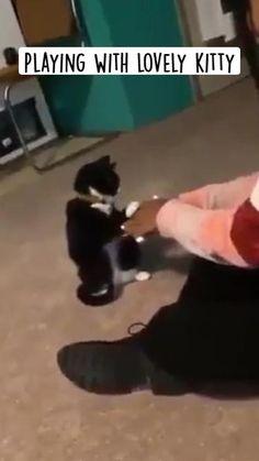Funny Animal Jokes, Funny Cute Cats, Cute Cat Gif, Cute Cats And Kittens, Funny Animal Videos, Cute Funny Animals, Kittens Cutest, Cute Dogs, Baby Animals Super Cute
