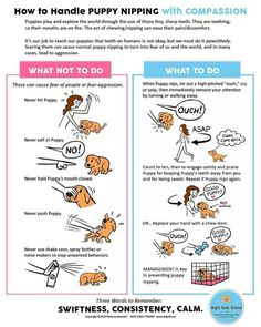 How to handle puppy nipping with compassion.