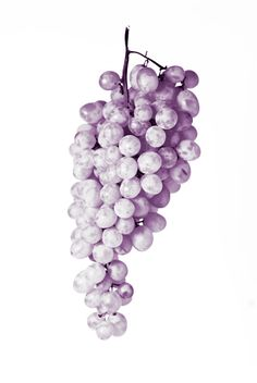 Cyber Monday food color photography kitchen decor grapes print - fruit still life purple monochromatic food art - 11x14 print. $30,00, via Etsy.