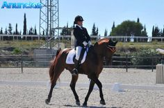 Se Dan Clases De EquitacióN - Equitación en Cádiz, Algeciras.