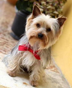 ¡Mirad quien se ha puesto guapo! ¿Cómo no va a venir, si es una parte fundamental de vuestra vida? Dogs, Wedding, Animals, Life, Valentines Day Weddings, Animales, Animaux, Pet Dogs, Doggies