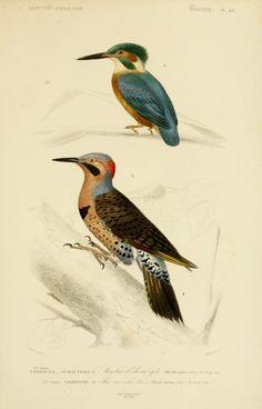 Résultats de recherche d'images pour «dessin couleur oiseaux»