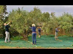 (735) Λιπάσματα για ελιές - YouTube Golf Courses, Youtube, Youtubers, Youtube Movies