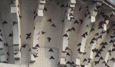 Darul Makmur Stadium, moth invasion,singapore moths