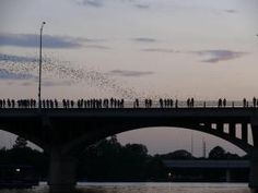 Emergence of the bats of the Congress Avenue Bridge in Austin, Texas at dusk. - Peter17/Wikimedia Commons