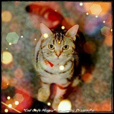 Happycat #cameran @truedragonfly-#cameranapp