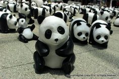 Hong Kong, Oct 2014. French artist Paulo Grangeon made 1,600 papier-mache to spread a very serious message. Due to human developments in their natural habitat, this represents exactly the same number of pandas that are still alive in the wild today. Each panda represented a real panda living in the wild today.