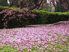 jardin japones ,Buenos aires