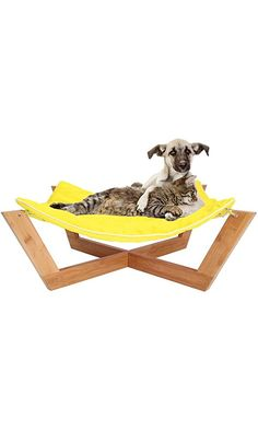 bamboo hammock ii   dog dog beds and doggies  rh   pinterest