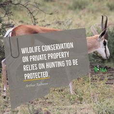 Well managed hunting on private property is the reason many species have been brought back from the brink of extinction . Blesbuck, Black wildebees, white and Black Rhino and Bontebok just to name a few. Andries Van Coller #Blesbuck #BlackWildebees #WhiteRhino #BlackRhino #Bontebok Private Property, Wildlife Conservation, Primates, Hunting, Van, News, Black, Primate, Black People