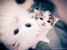 Cats.............