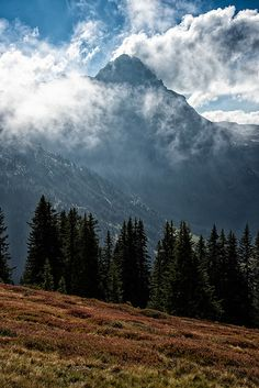 View from a trail close to Walmendinger Horn into the Lechtaler Alps Alps, Trail, Mountains, Horn, Nature, Nice Asses, Horns, Nature Illustration, Off Grid