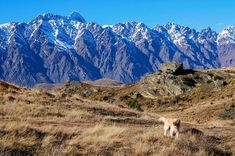 when you know you're a good boy 🐶 Queenstown New Zealand, When You Know, Knowing You, Re A, Mount Everest, Mountains, Boys, Nature, Naturaleza