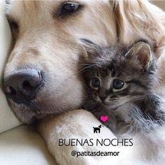 Como perro y gato...