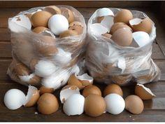 Už nikdy nevyhazujte vaječné skořápky! Jsou úžasným pomocníkem na zahradě – geniální rady od našich babiček! Garden Projects, Projects To Try, Planters, Eggs, Food, Fairy, Drink, Garden, Beverage