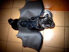 bat wings costume for dog or cat costume halloween, $18.00