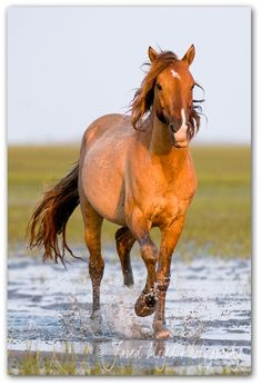 Shackleford Banks, NC, small Island with some of the few wild horses left on the east coast.   Ready to hit the road!