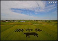 台南市政府農業局指出,彩繪圖案由台南區農業改良場嘉義分場長羅正宗規劃設計,用可代表後壁區稻米文化的「無米樂」為主題,經電腦精算標出圖案位置,再分種綠、紫2種不同顏色的水稻。在一片綠油油的稻田中,以紫色稻米呈現出大型「無米樂」字樣及水牛圖案。