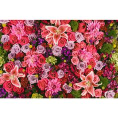 Daylight Dreams Editions Tropical Flower Wall Pink 24 x16... ($150) ❤ liked on Polyvore featuring home, home decor, wall art, posters, flower stem, pink flower wall art, pink poster, photo poster and flower wall art