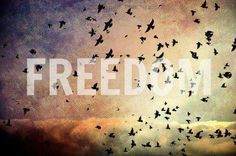 Wildlife Nature Photography // Fine Art Photograph The Flock by Heather Reid // Blackbird Starling Sunset Rainbow Birds Flying Magical Cute Love Quotes, Frases Do Tumblr, Tumblr Quotes, Sky Quotes, Bird Quotes, Want To Be Loved, Let It Be, Angels And Airwaves, Such Und Find