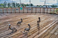 How many pelicans did you see? by amilcar1933 #nature #mothernature #travel #traveling #vacation #visiting #trip #holiday #tourism #tourist #photooftheday #amazing #picoftheday