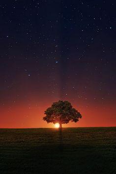 #Sonnenuntergang in der Savanne.  #Landschaft #Natur #Erde