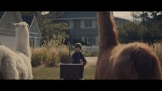 """Llamas and a Little Boy star in """"The Performance"""" - A holiday short film..."""