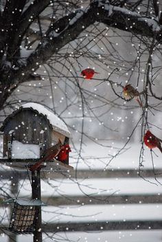 Winter day in the country… Red Birds, White Snow. Winter Szenen, I Love Winter, Winter Christmas, Winter White, Winter Magic, Christmas Decor, Christmas Tree, Winter Colors, Christmas Morning